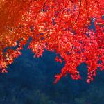 今月のひとこと【10月・October】