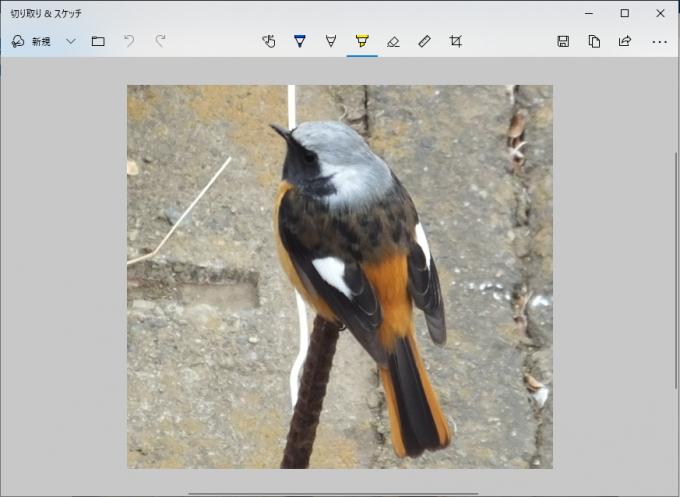 立ち上がった「切り取り&スケッチ」アプリに、切り取った画像が表示される